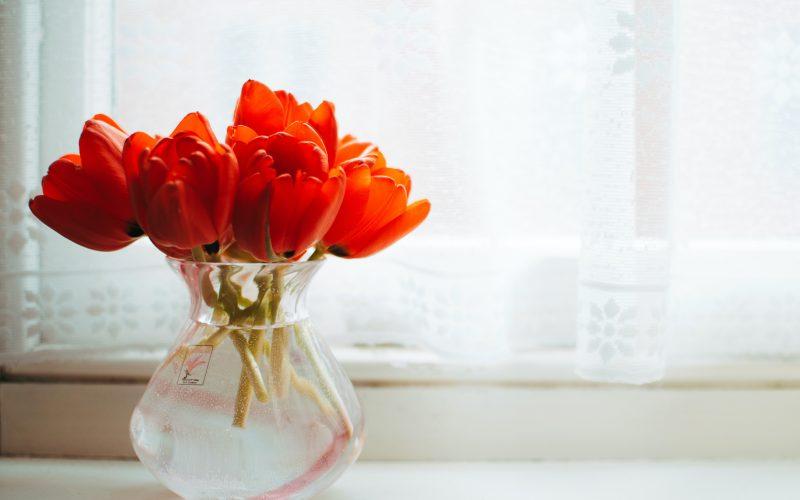 Péče o tulipány