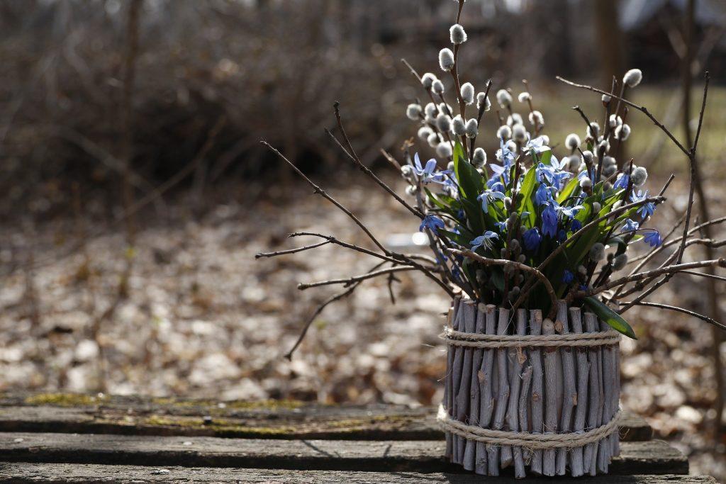Jarní květiny vždy potěší. Fotka od Margarita Kochneva z Pixabay.