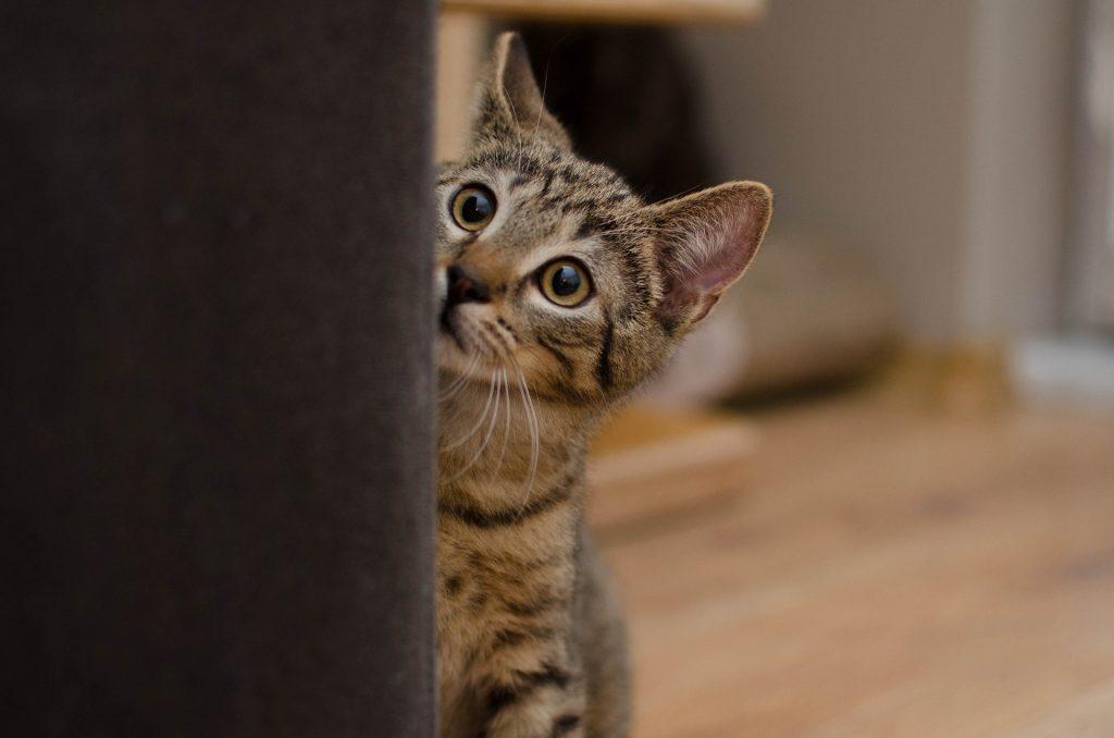 Pokud mělo zvíře pohnutý osud, nespěchejte na něj.  Fotka od Daga_Roszkowska z Pixabay.