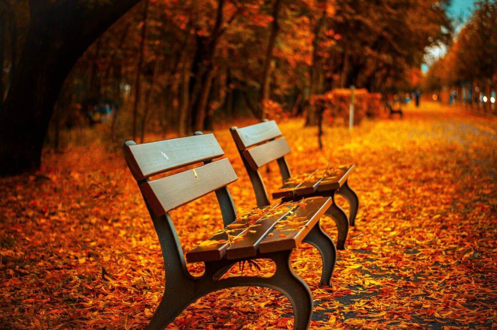 """Můj život se změnil během procházky v městském parku, kde mě kouslo klíště.""""  Fotka od Pepper Mint z Pixabay."""